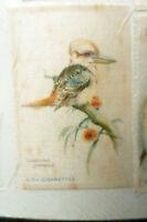 B.D.V. Cigarettes Silk (Bird Silk)- BIRD LAUGHING JACKASS Original Printed Silk