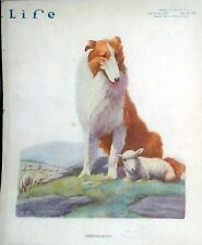 A Collie Dog Protecting A Young Lamb Reprint Life Magazine Cover 1920