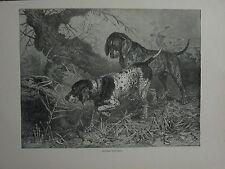 Impresión De 1881 punteros ~ Vero Shaw Cassell alemán el libro del Perro