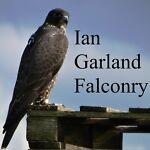 Ian Garland Falconry