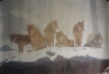 Arctic Wolves 27x39 Wildlife Poster 1992 Wolf Pack