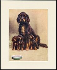 GORDON SETTER MOTHER AND PUPPIES CHARMING DOG PRINT MOUNTED READY TO FRAME