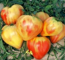 50 Tomato Seeds Orange Russian Tomato Garden Seed
