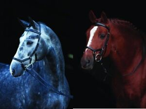 Horseware Rambo Micklem Competition Bridle Gr. Pony - Large Horse + gratis Zügel