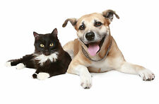 DIATOMACEOUS EARTH 1.6kg Natural FLEA MITE TICK LOUSE KILLER Cat Dog Pet Powder