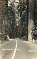 California~Along Redwood Highway~US 101~Giant Tress Line Road~1930s RPPC