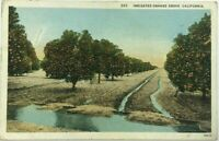 Postcard Irrigated Orange Grove Trees Orchard California CA 1920's White Border