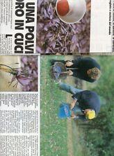 SP61 Clipping-Ritaglio 1988 Piana di Navelli Abruzzo Zafferano c'è una polvere..
