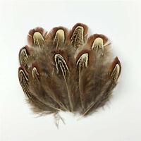 50X Fasanfedern Fasan federn Vogelfedern Schwanz Hutfedern basteln Deko 5-8cm