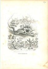 Steeple-Chase Poulpe Pieuvre Calmar  ANTHROPOMORPHISME 1842 GRAVURE OLD PRINT