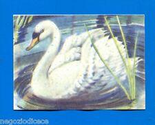 ANIMALI - Lampo 1964 - Figurina-Sticker n. 239 - CIGNO -New