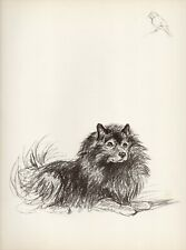 More details for keeshond and small bird old 1937 dog art sketch print artist lucy dawson