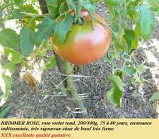 graines de tomate brimmer vendu en sachet de 60 graines