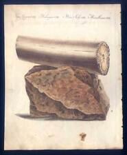 Archäologie-Mammut-Elefantenzahn-Mammutzahn - Bertuch-Kupferstich 1800 Stoßzahn!