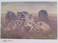 "Vintage John Le Roi Sheffer Pride of Lions Sample Wall Art Print 1974 24"" x 18"""