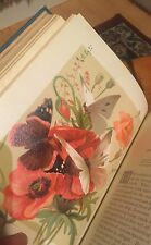 Birds And Butterflies By M S Musgrave Beautiful Prints