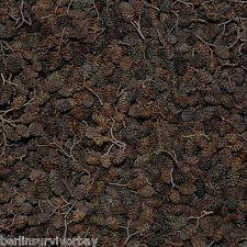 1,65lbs / 750g / 2000pcs organic Alder Cones, Alnus glutinosa, Black Alder Cones