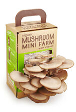 1Box Back to the Roots USDA Organic Mushroom Mini Non GMO Harvest in 10 Days NEW