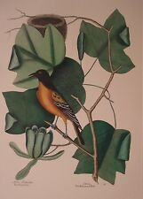 Mark Catesby Baltimore Bird Lithograph Hand Colored Reproduction Vintage