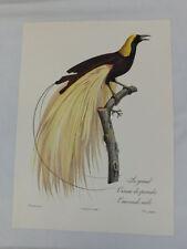 VINTAGE BIRD PRINT BIRD OF PARADISE EMERALD 1963 JACQUES BARRABAND