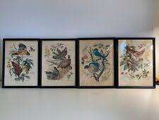 Vintage 1956 Signed Art Prints Arthur Singer Birds Flowers #2, 5, 8
