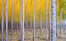 SPLENDIDA tela foresta paesaggio natura #268 qualità immagine A1 Taglia Wall Art