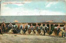 Vintage Postcard Sheering Sheep in Eastern Oregon Message Written in Woodstock