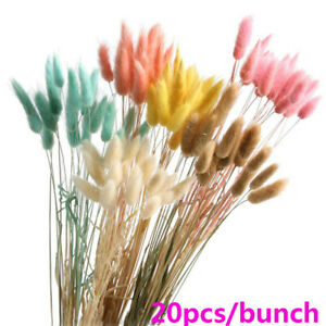20PC Rabbit Tail Grass Bunny Tails Dried Flowers Lagurus Ovatus Plant Stems