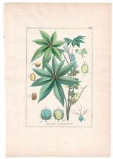 1846, Antique H/C print, Ricinus Communis, Winkler Medical Botany