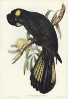 JOHN GOULD FUNEREAL (YELLOW-TAILED BLACK) COCKATOO VINTAGE BIRD ART PRINT POSTER