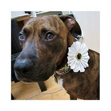 White on White Fabric Collar Flower for Dogs - New - FREE SHIPPING