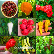 100 Pcs Seeds 16 Kinds Hot Chilli Pepper Capsicum Vegetable Bonsai Free Shipping