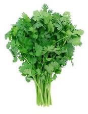 25 Graines de Coriandre Non Traité plantes jardin potager aromatique légumes