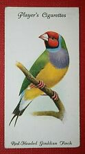 Red-headed Gouldian Finch   Original 1933 Vintage Small Colour Card