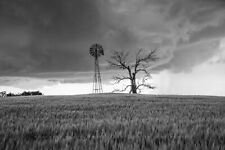 Country Photography Print - Black and White Picture of Windmill Tree in Oklahoma