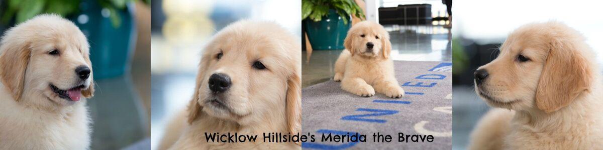 Merida's Gold