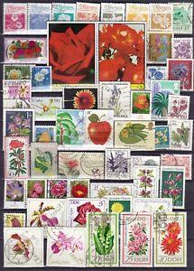 Blumen und Pflanzen Motivsammlung