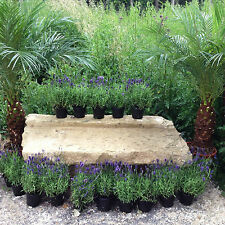 Antique Garden Bench Herbs Table Planting Natural Stone Wall steinbank