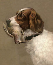 Antique 8 X 10 Hunting Photograph Reprint English Setter With Woodcock