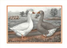 Emden and Toulouse Goose by LA Stahmer 1926-52 Poultry Tribune Reprint