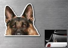 German Shepherd peeper Sticker quality 7 year water & fade proof vinyl dog cute