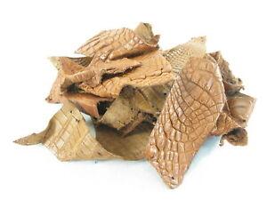 PELGIO Genuine Crocodile Alligator Skin Leather Hide Pelt Scraps 100 g Tan Brown
