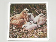 HEN HARRIER AND CHICKS Bird 9cm Square drinks mat coaster plastic acrylic (A)