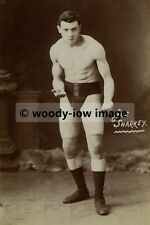rp02337 - Boxer - Joe Sharkey - photo 6x4