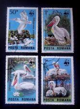 Romania/WWF-1984 - Dalmation serie PELLICANO-SET COMPLETO-USATO