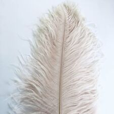 """Ostrich Wing Feather Plumes 60-65cm (24-26"""") - Champagne"""
