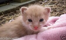 SPONSOR RESCUED FERAL CAT KITTEN HELP FEED VET SHELTER RECEIVE Rec COLOR PHOTO