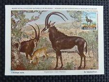 Angola MK 1953 antilope maximum carta carte MAXIMUM CARD MC cm c1190