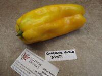 Quadrato Giallo d'Asti Paprika - 10+ Samen - Saatgut - süß gelb - Gemüsesamen