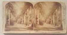Rare 1896 Underwood & Underwood Stereoview Card Honolulu, Hawaii Queens Hospital